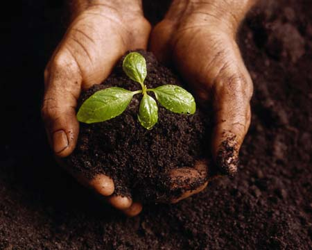 sowing the seeds of life, planting Christ into people, and ...