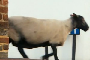 Video: Maps, Apps, Chats – Completely connected QWERTY with Nokia (i)Sheep Ad